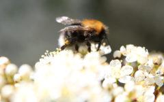 Giornata mondiale delle api (1)