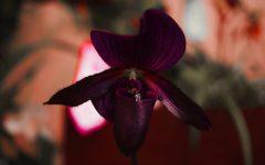Orchidée Impériale Black Cream Guerlain